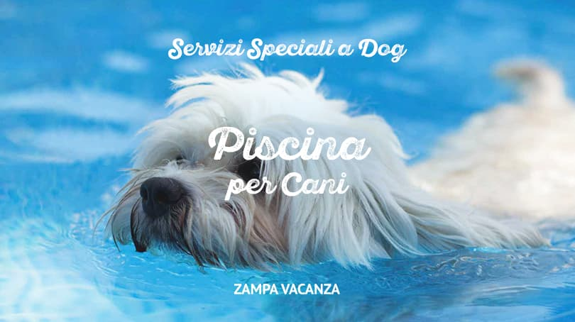 Servizi speciali a dog - Piscina per cani ...