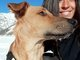 Tails On Trails - Dog Sitter Livigno