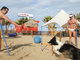 Rimini Dog No Problem - Bagno 81
